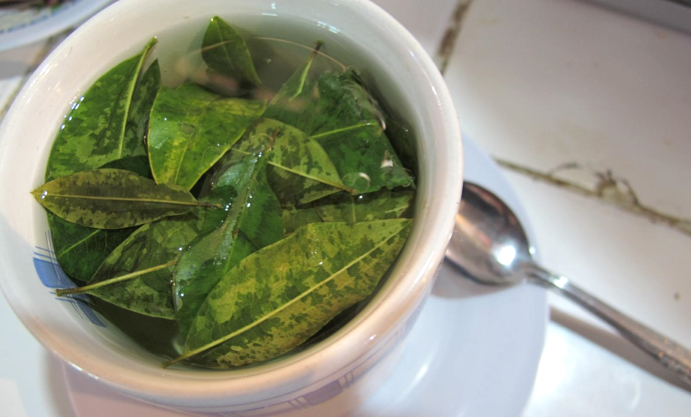 Coca tea and drug tests